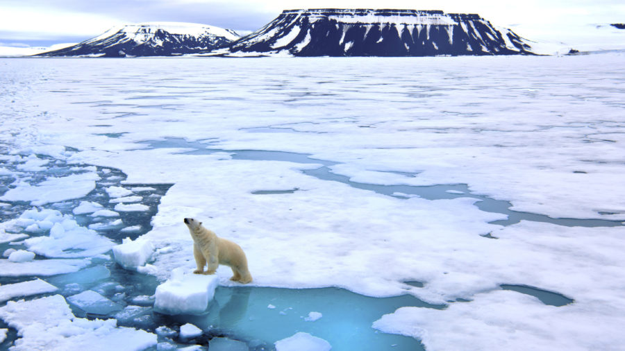 A lone polar bear poses on a block of arctic sea ice in Russia's Franz Josef Land.